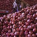 Modi govt immediately banned export of all varieties of onion